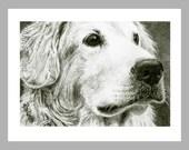 Golden Retriever Dog Art - 5 Blank Note Cards With White Envelopes - Ranlett