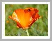 Ladybug and Poppy Photo - 5 Blank Note Cards With White Envelopes - Ranlett