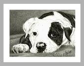 American Bulldog Puppy - 5 Blank Note Cards With White Envelopes - Ranlett