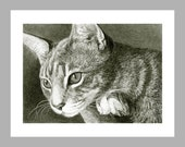 Watchful Grey Cat - 5 Blank Note Cards With White Envelopes - Ranlett