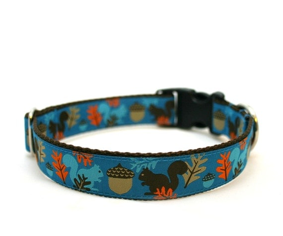 "1"" dog collar Squirrels are Nuts buckle dog collar"