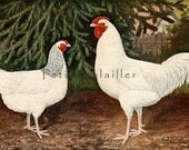1893 Antique Kurt Zander Signed Lithograph of Some Very Fancy Chickens