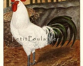 1893 'Oftfriefifdher Gilber Moven', Kurt Zander Lithograph of Some Very Fancy Chickens