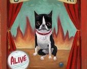 Boston terrier circus sideshow print by B Rubenacker