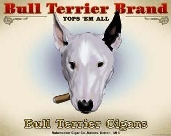 Bull Terrier Cigar Label print