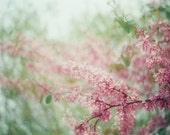 Spring -  5x7 original film art photograph of blossoming tree in pale pink