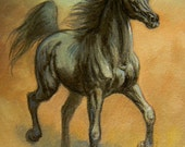 SPIRITED black arabian original ACEO  oil painting equine horse art by Kerry Nelson