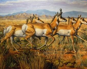 Pronghorns original wildlife art oil painting by Kerry