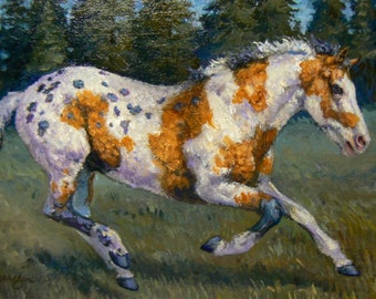 Pintaloosa Curly Horse - equine original 4x6 oil painting by Kerry