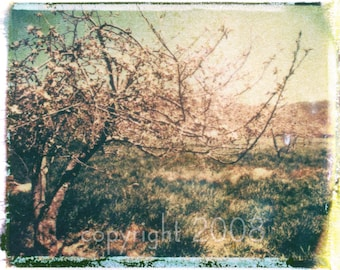 Polaroid transfer - Apple orchard