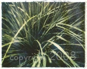Polaroid transfer - Green Plant