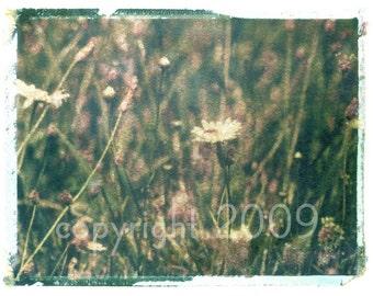 Polaroid transfer - Green Field of Daisies