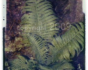 Polaroid transfer - Green Fern