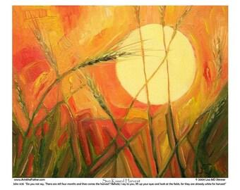 Sun-Kissed Harvest - 8 x 10 Art Print