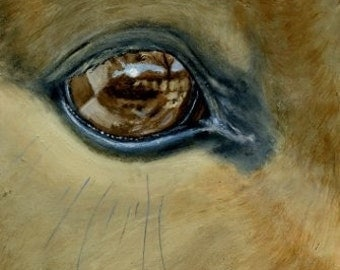 A Mule A Day, mule eye reflections, original painting