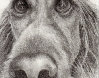 ACEO Print Tiny Art Irish Setter Waiting for a Scooby Snack Animals Dogs A4C