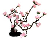 Love Enchanted Sakura Gnarl Bonsai - Prunus serrulata - by Tanja Sova