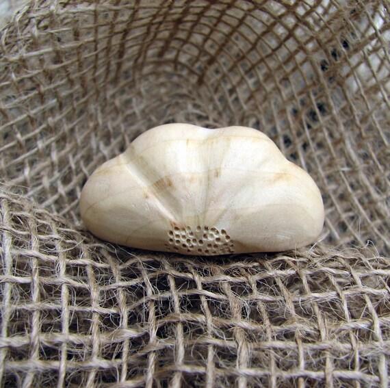 Allium sativum - Garlic Cloves Tupelo Wood Brooch - Pin - Pendant - Token  by Tanja Sova