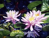 Waterlilly Day Dreamer   Print of original Watercolor Painting