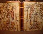Anatomically correct, handbound exposed spine blank journal