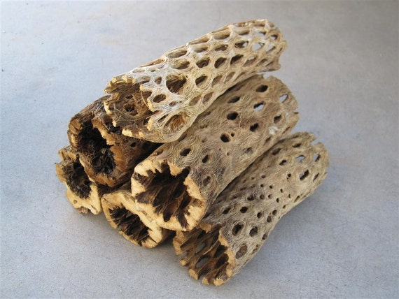 6 pieces of Cholla Cactus Wood 6 Inch Logs