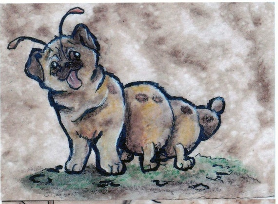 ACEO Print Set Lifecycle of a Puggerfly