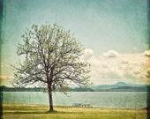 Oak Tree & Lake Photography - landscape home decor print, blue green, summertime picture