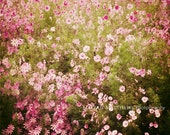 Flower Garden Photograph, Pink Coscos, Shabby Chic Wall Art, Nursery Decor, Floral Print, Pink and Green