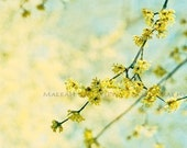 Yellow Tree Flower Photography - pastel blue and yellow, baby nursery print