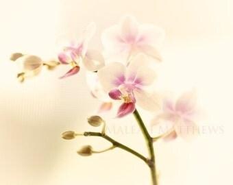 Le jardin d'Eden - 8x10 Fine Art Photography Print