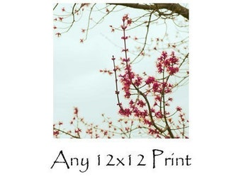 Any Print As A 12x12 - Fine Art Photography