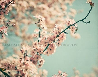 Peach Tree Blossom Photography, dainty pastel aqua home decor, floral wall art, vintage chic style print, spring