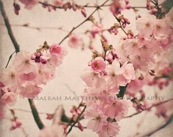 Vintage Pink & Brown Cherry Tree Blossoms Photography, pastel baby nursery print
