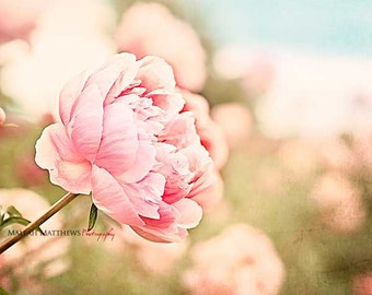 Pink Peony Wall Art, Flower Photography, Pink Peonies, Girl Nursery Wall Art, Peony Home Decor, Peonies, Pink & Blue