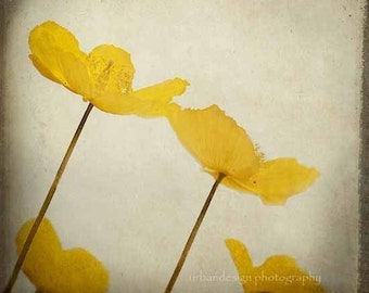 Yellow Poppy Photo - as seen at the 2013 Oscars GBK Gift Lounge - flower wall art, spring home decor