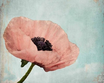Poppy Flower Nature Photography - pastel vintage print, shabby chic home decor photo