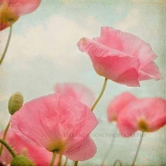 Poppy Floats - 8x8 Fine Art Photography Print