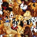 By the Yard Timeless Treasures STACKED DOGS Brown BART-C6098 Fabric