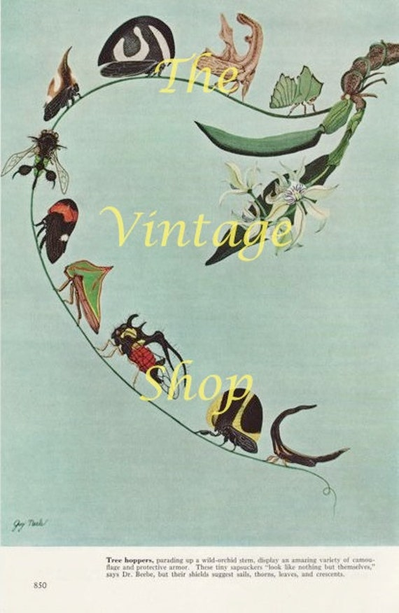 Rainforest Creatures..Tree Hoppers..Guy Neale Print 1950s