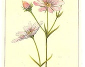 5 Old 1894 Book Plates WILD FLOWERS Of AMERICA, Flower Of Every State In The American Union By A Corps Of Special Artist And Botanists