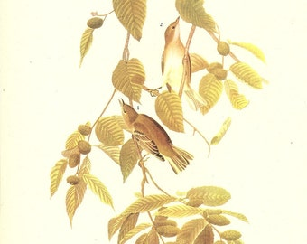 Old 1937 JOHN JAMES AUDUBON The Birds Of America Book Plate Bay - Breasted Warbler (88)