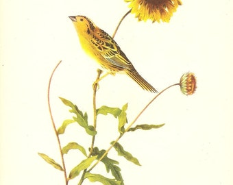 Old 1937 JOHN JAMES AUDUBON The Birds Of America Book Plate Leconte's Sparrow (488)
