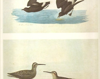 5 Old 1966 Water-Color Painting John James AUDUBON For Birds Of AMERICA Vol.I Book Plates