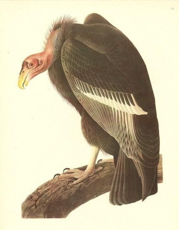 Old 1937 JOHN JAMES AUDUBON The Birds Of America Book Plate California Condor (426)