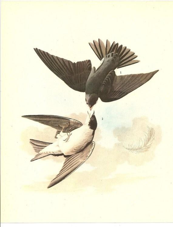 Old 1937 JOHN JAMES AUDUBON The Birds Of America Book Plate Tree Swallow (100)