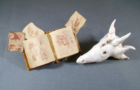 Miniature Book Medieval Gold Illuminated Open Dragon Book with Dragon Skull Ooak Miniature