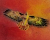 Prismacolor art print of Spirit Hawk 10x8