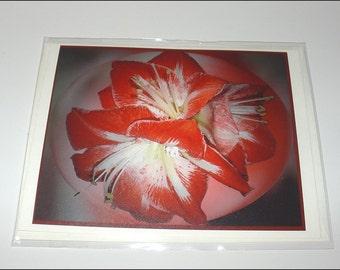 Card, Amaryllis Design, notecard