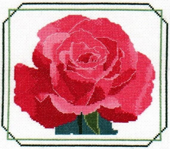 Pink Rose-LB02179