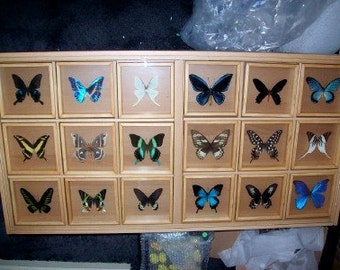 Butterfly and Moth Coffee Table